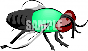 Insect Clipart