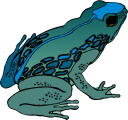 Frog Clipart - Royalty Free Amphibians Clip art