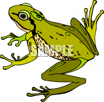 Royalty Free Frog Clip art, Amphibians Clipart