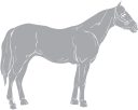 Horse Clipart