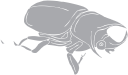 Beetle Clipart