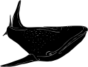 Aquatic Animals Clipart