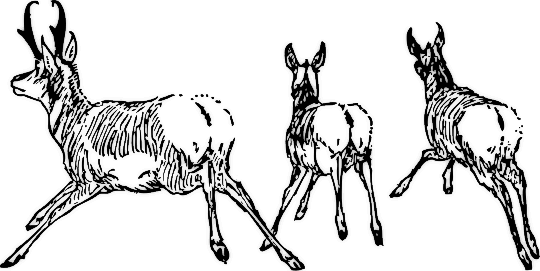 Free Antelope Clipart