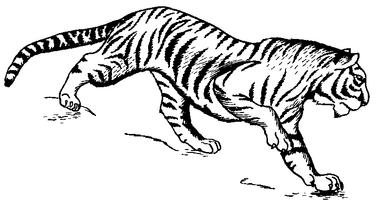 Free Walking Tiger Clipart