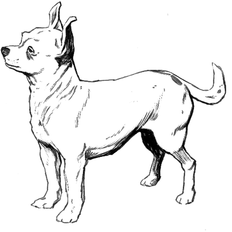 Chihuahua Dog Clip Art Sketch Coloring Page