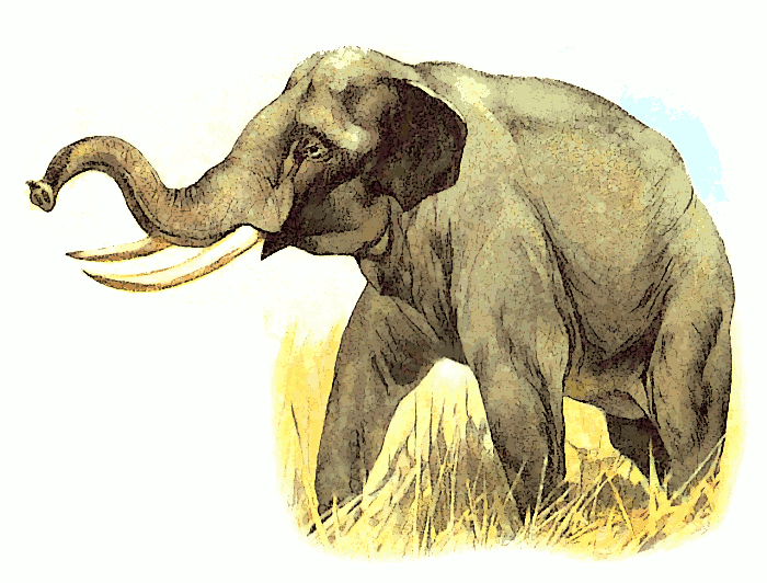 Free Asian Elephant Clipart