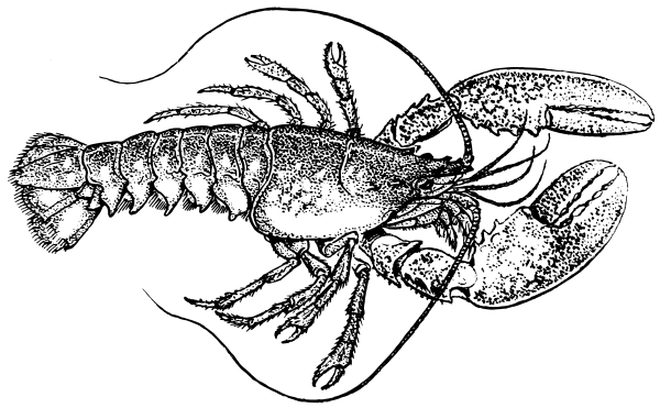 Free Lobster Clipart
