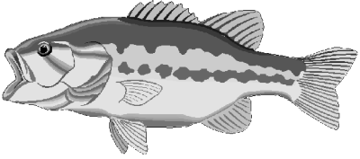 Free Fish Clipart