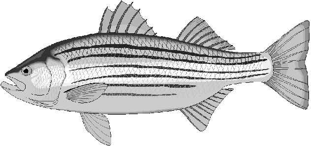 Free Fish Coloring Pages Clipart
