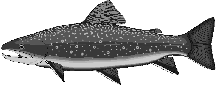 Free Brook Trout Clipart