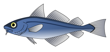 Free Catfish Clipart