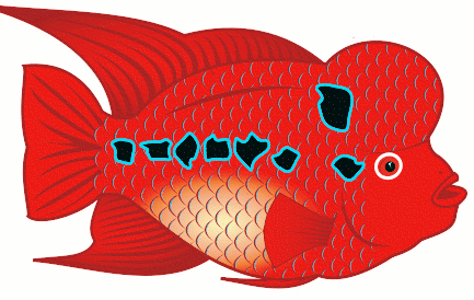 Free Colorful Fish Clipart