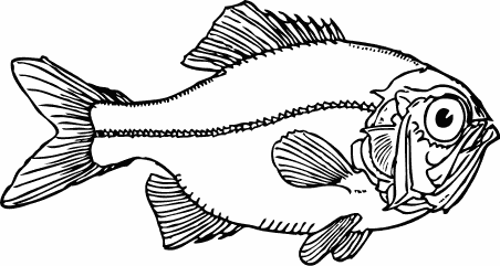 Free Ugly Fish Clipart