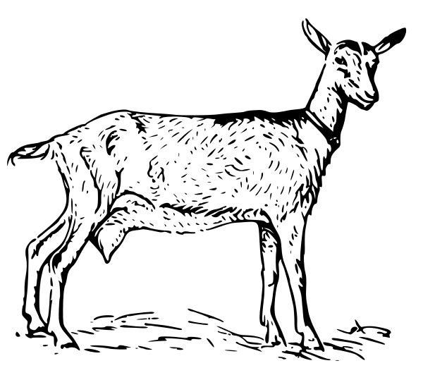 Free Bearded Goat Clipart