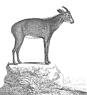 Free Buck Goat Clipart