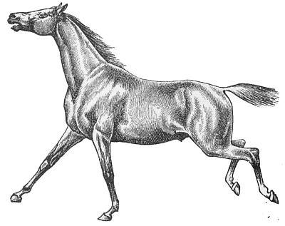 Free Horse Whinnying Clipart