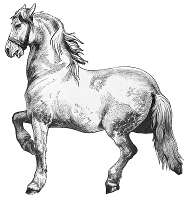 Free Horse Coloring Pages Clipart