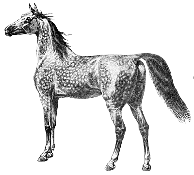 Free Dappled Grey Horse Clipart