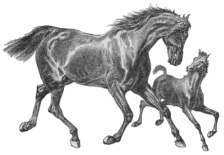 Free Thoroughbred Clipart