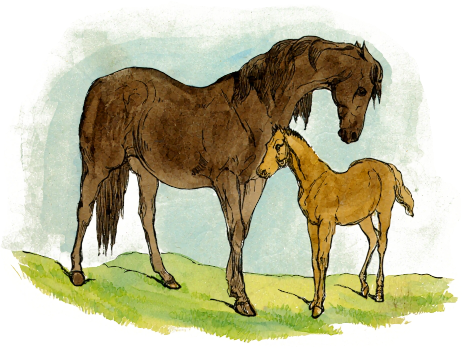 Free Mare and Foal Clipart