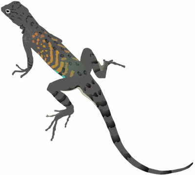 Free Colorful Lizard Clipart