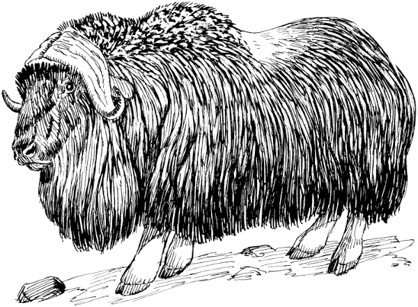 Free Musk Ox Clipart