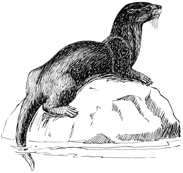 Free Otter Clipart
