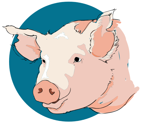 Free Pink Pig Clipart