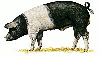 Free Black and White Pig Clipart