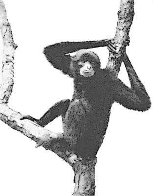 Free Gibbon Clipart