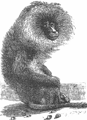 Free Black and White Monkey Clipart