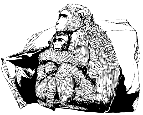 Free Macaque Clipart