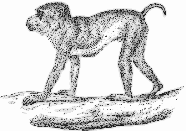 Free Macaque Monkey Clipart