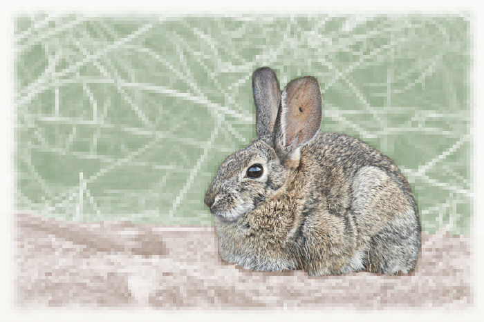 Free Cottontail Rabbit Clipart