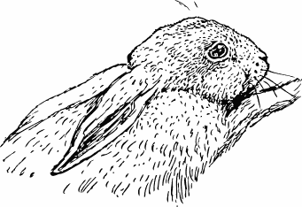 Free Rabbit Coloring Page Clipart