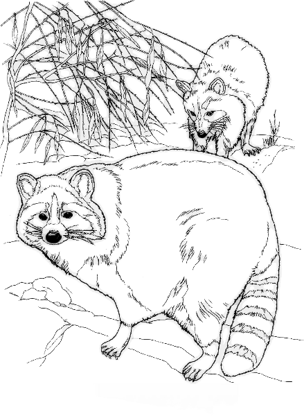 Free Raccoon Mother and Baby Clipart
