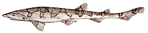 Free Cat Shark Clipart
