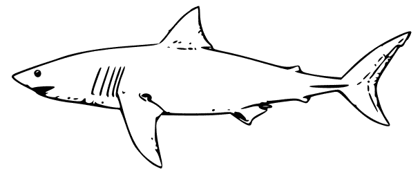 Free Black and White Shark Clipart