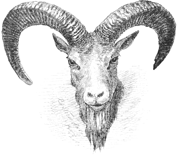 Free Punjab Wild Sheep Clipart