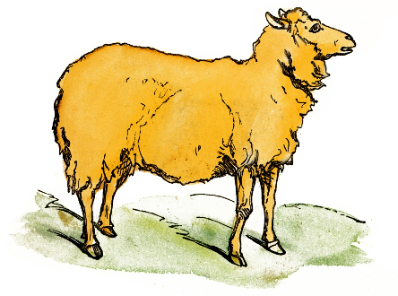 Free Sheep Clipart, 1 page of Public Domain Clip Art