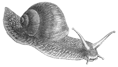 Free Black and White Snail Clipart