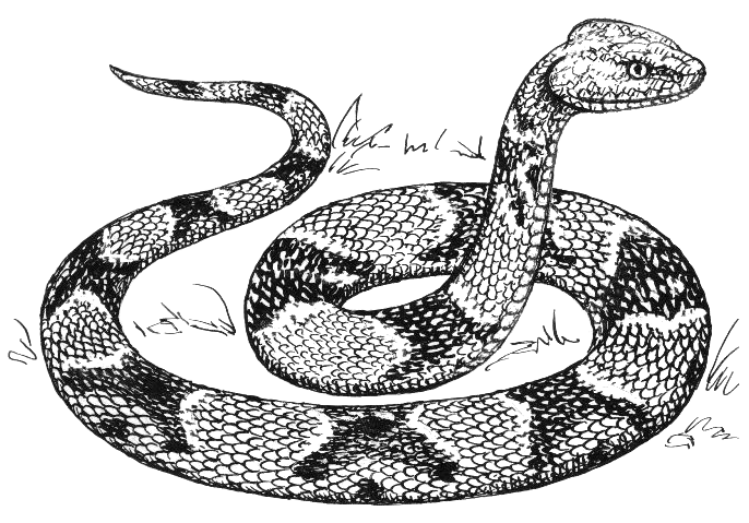 Free Copperhead Clipart