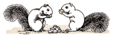 Free Black and White Squirrel Clipart