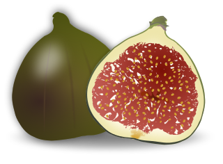 Free Fig Clipart