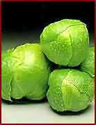 Free Brussels Sprout Clipart