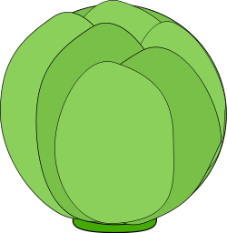 Free Cabbage Clipart